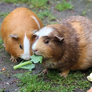 Small Animals