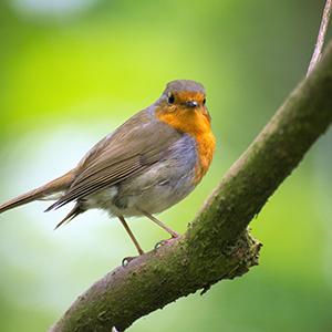 Wildlife & Wild Birds